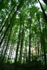 Lasy Uprawnione w Sidzinie